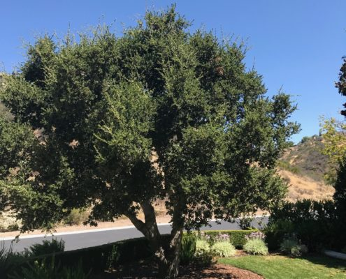 berylwood-tree-farm-large-trees-vines-projects-shrubs-california-sm11