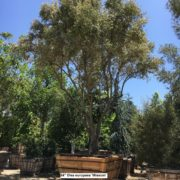 berylwood-tree-farm-large-trees-vines-shrubs-california-sm11
