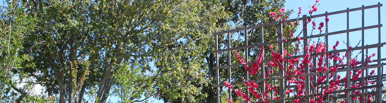 berylwood-tree-farm-current-availability1